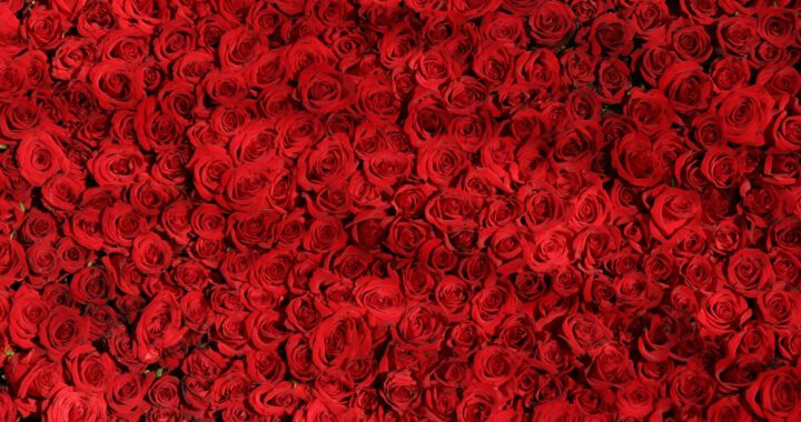 rozen bestellen